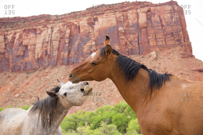 Two wild horses in Canyonlands National Park
