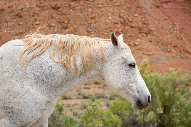 Close-up of horse in Canyonlands National Park