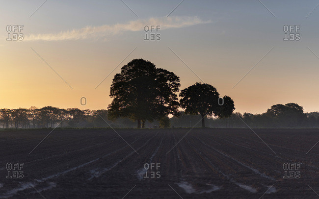 Bare agricultural field with trees at sunrise.
