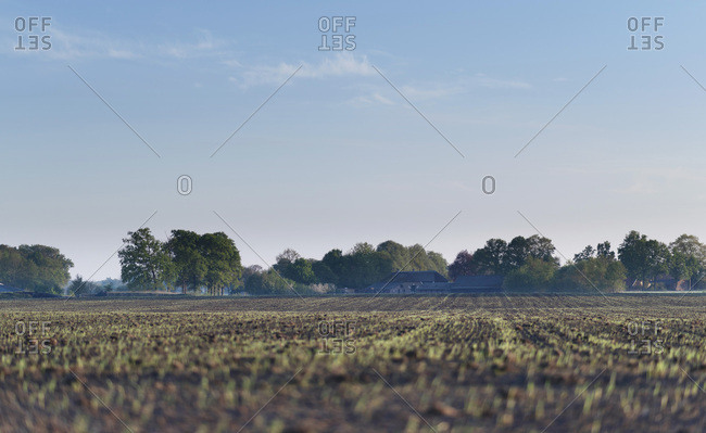 Agricultural field with fresh crops under blue sky.