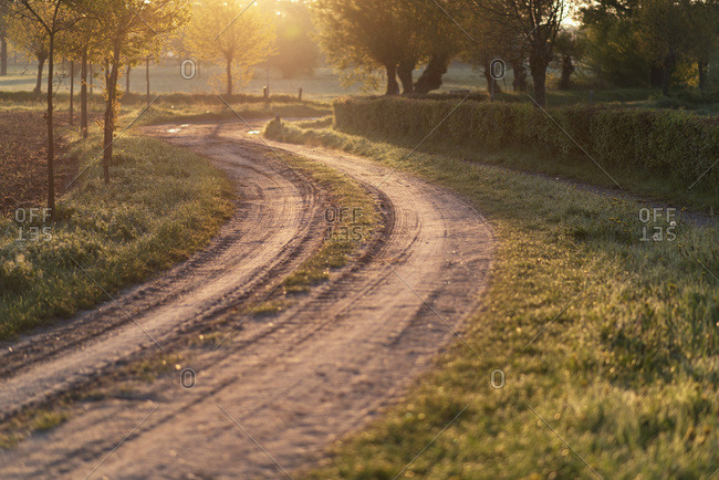 Curved country road in backlight of morning sun.