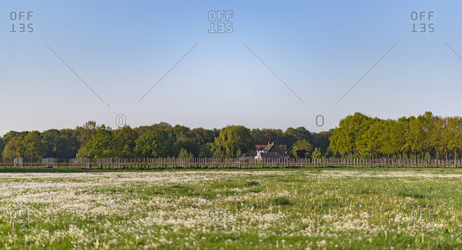 Meadow with wild flowers in rural landscape during springtime.