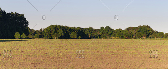 Fresh sown field with trees in morning sun during spring.