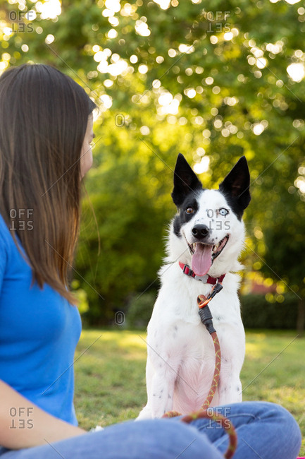 Dog owner sitting cross legged on grass with happy border collie