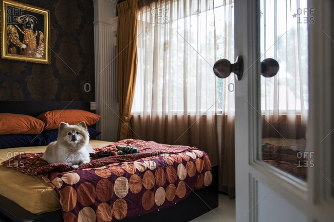 Singapore - October 20, 2017: Dog lying on bed in luxury room at The Wagington pet hotel