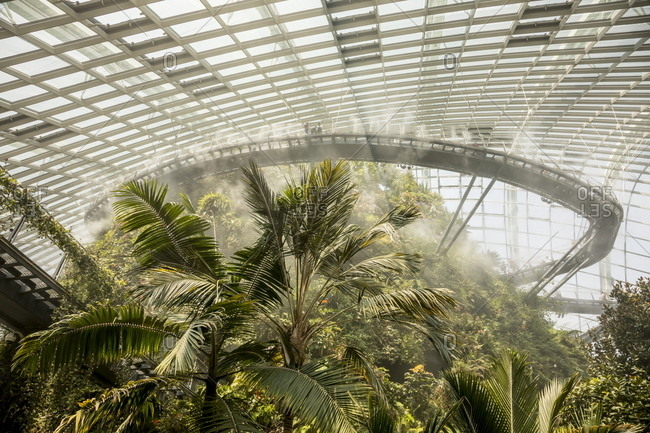 Singapore - October 21, 2017: Lush tropical vegetation inside the Cloud Forest greenhouse at Gardens by the Bay