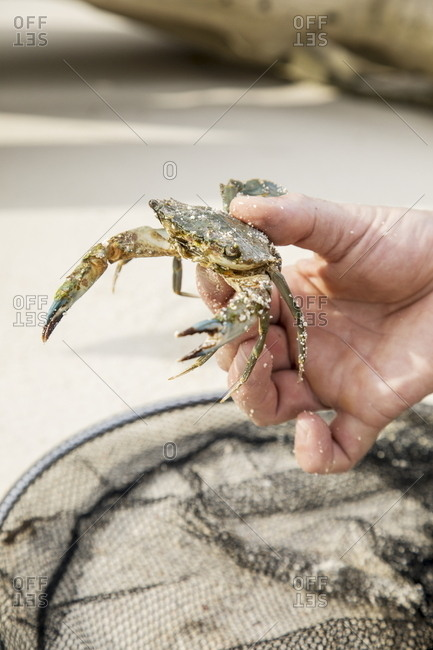 Man holding crab from a net in Indonesia