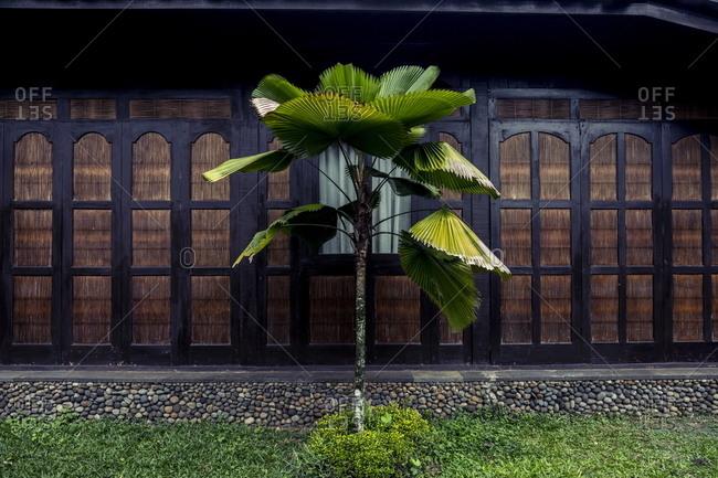Tree outside the Mesa Stila Resort in Central Java, Indonesia