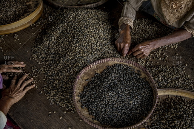 Workers selecting the best coffee beans from the local plantation in Central Java, Indonesia