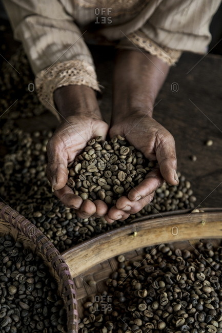 Worker holding coffee beans from the local plantation in Central Java, Indonesia