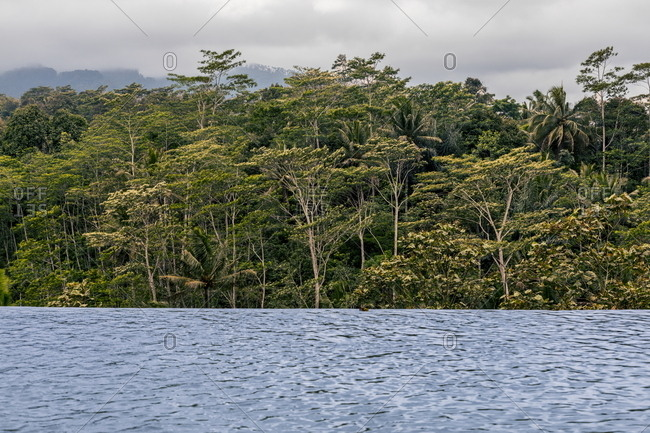 Dense forest on the coast of Central Java, Indonesia
