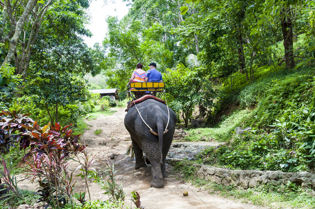 Rear view of tourists on an elephant ride in Phuket, Thailand