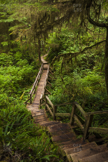 Boardwalk amidst plants in forest at Pacific Rim National Park