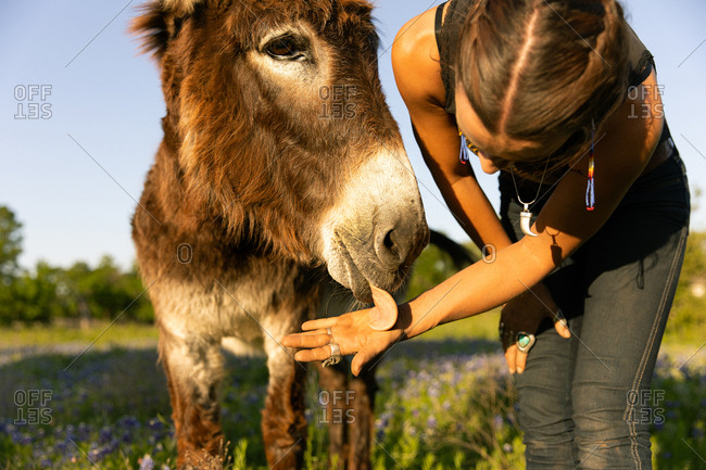 Donkey licking woman's hand on a farm