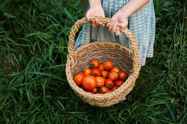 Young girl holding basket full of tomatoes