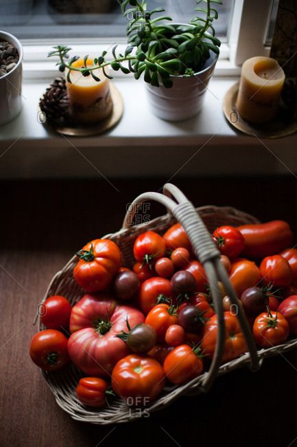 Fresh picked tomatoes in a basket