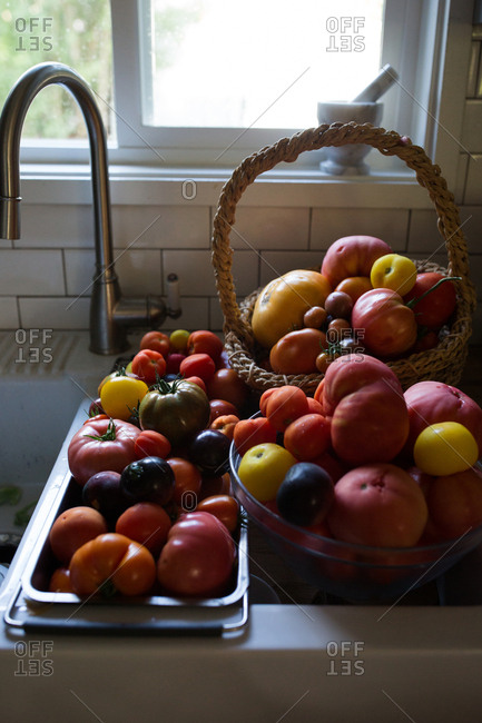 Variety of fresh picked tomatoes by kitchen sink