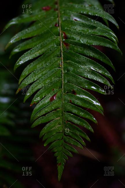 Close up of a wet fern