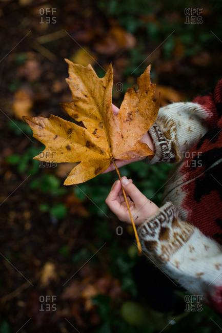 Girl holding large brown fallen leaf