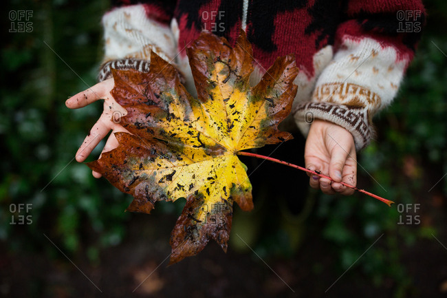 Girl holding large brown and yellow fallen leaf