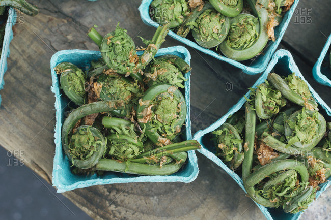Top view of fiddleheads in market