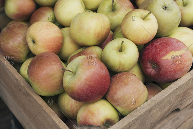 Crate filled with Fuji apples in greenmarket