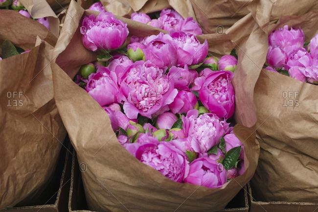 Fresh pink Peonies at flower market