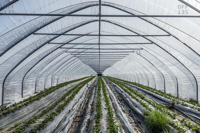 Interior of large greenhouse in Bavaria