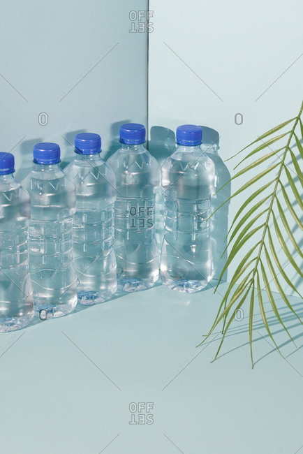 Row of sealed bottled water along backdrop wall with fern