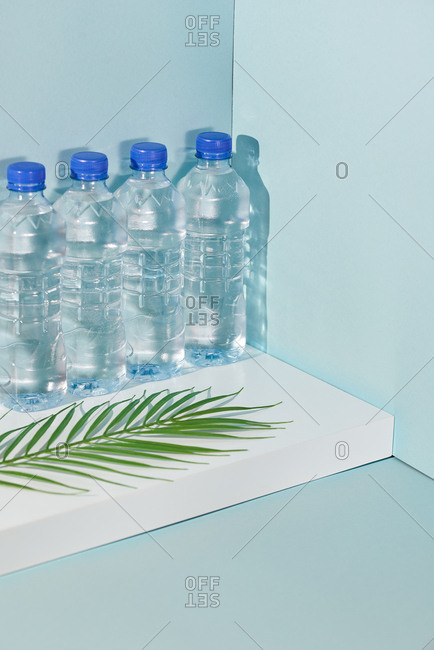 Fern leaf in front of row of water bottles
