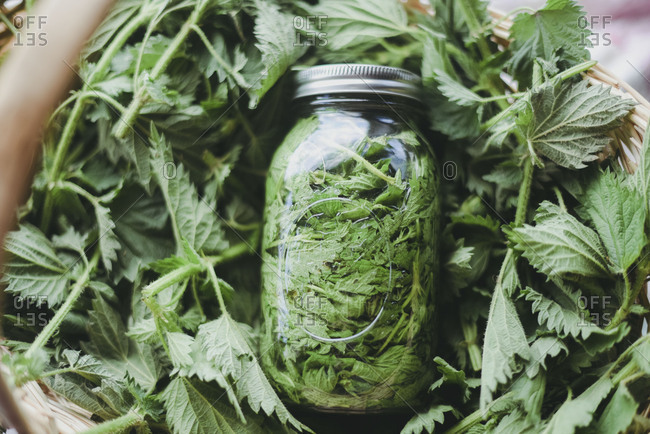 Stuffed glass jar in pile of fresh picked leaves