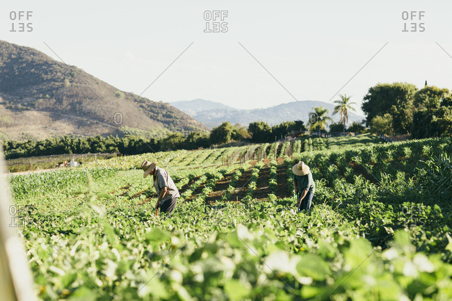 Two field workers farming on sunny day