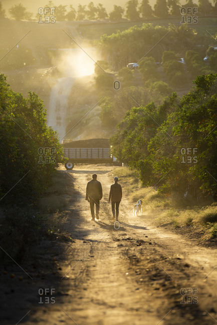 Back view of two farmers walking on dirt road with dog