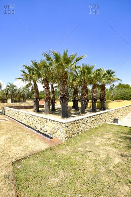 Trees grow in a public municipal botanical park, Salou, Costa Dorada, Catalonia Spain