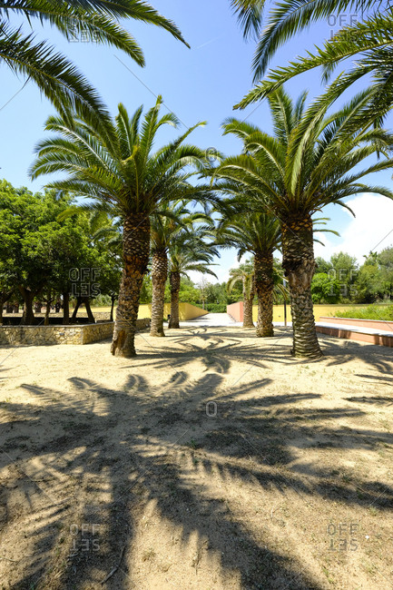Trees in a public municipal botanical park, Salou, Costa Dorada, Catalonia Spain