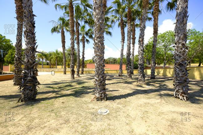 Weathered trees in a public municipal botanical park, Salou, Costa Dorada, Catalonia Spain