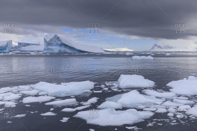 Icebergs and growlers off Cuverville Island, Errera Channel, Danco Coast, Antarctic Peninsula, Antarctica, Polar Regions