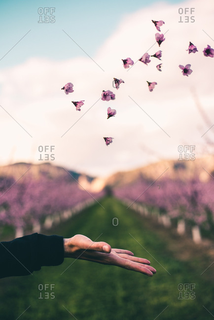 Crop hand of unrecognizable person throwing up pink flowers in the garden.