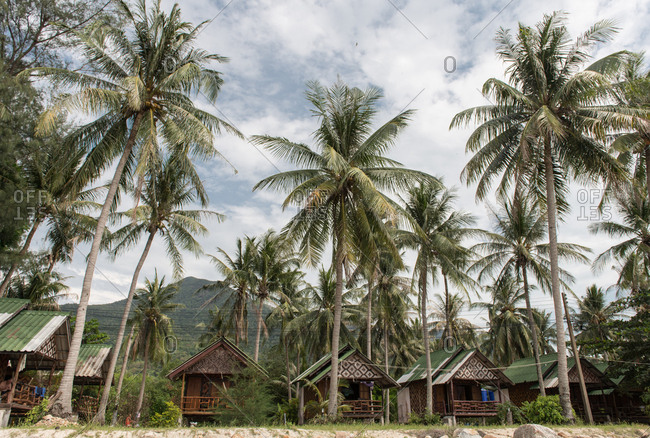 View to tall palms and small bungalows in Thailand.