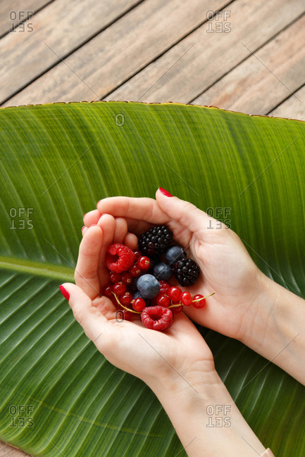 Top down view of woman's cupped hands holding summer berries