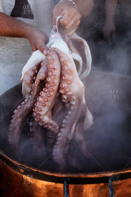 Close up of cook pulling large octopus out of vat of boiling water