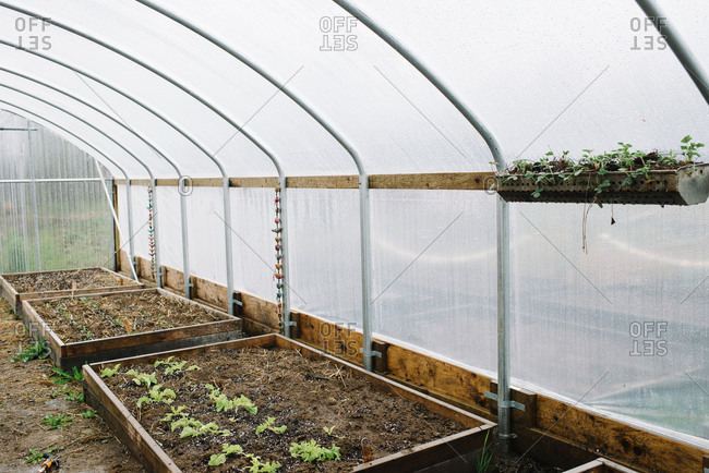 Hanging vegetable planter on sidewall of greenhouse interior