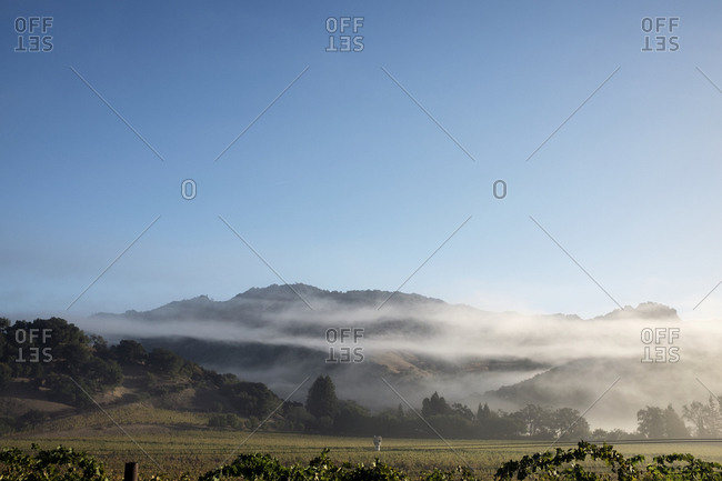 Early morning fog over vineyards in the Napa Valley