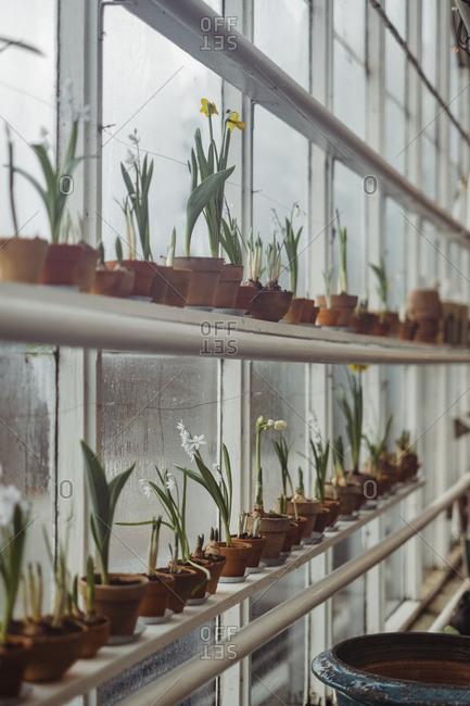 Flowers growing in greenhouse windows