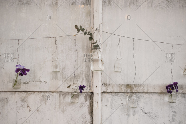 Purple pansies in mason jars on the side of a building