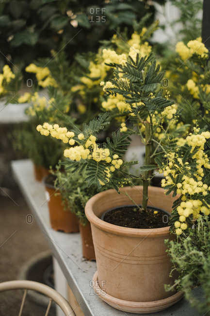 Yellow flowers growing at a nursery