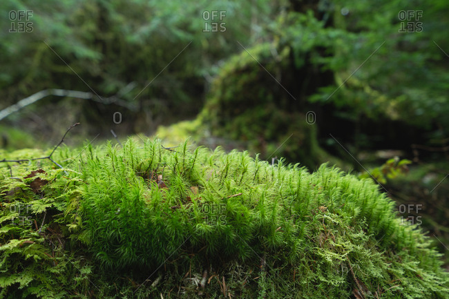 Close up of green foliage