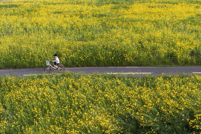 Jung-gu, Ulsan, Korea - May 31, 2018: A child rides a bike in Taehwa River Park