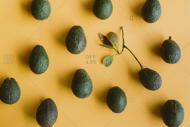Avocado design from the Offset Collection
