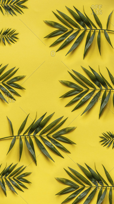 flat lay of palm tree leaves on a bright yellow background stock
